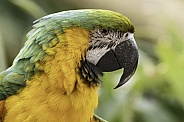 Macaw Side Profile