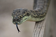 Childrens Python