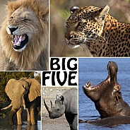 The Big Five - Africa