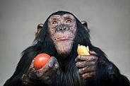 Young chimpanzee (Pan troglodytes)