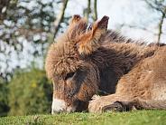 Donkey Foal