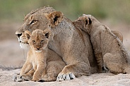 Cubs & Mum