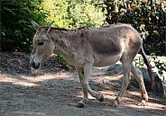 Oonager