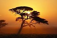 Sunrise in Etosha National Park - Namibia