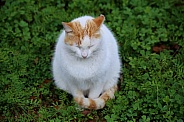 White and Orange Spotted Cat