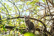 DSH in a tree