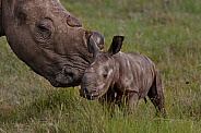 Rhino mom loving baby