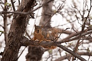Wild squirrel