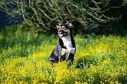 Mixed breed dog in wild flowers