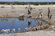African wildlife at a busy waterhole - Namibia