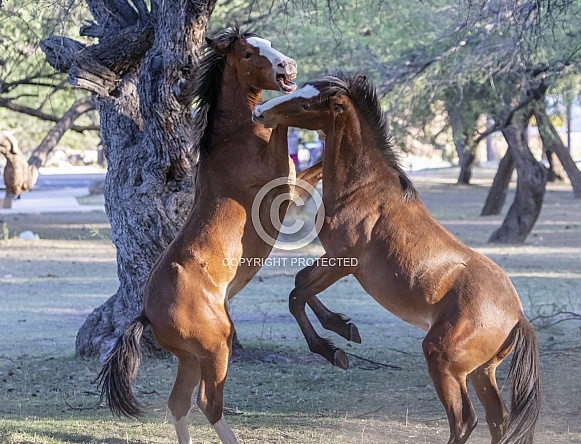 Young wild horses sparing