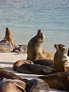 Galapagos Sea Lions - Galapagos Islands - Ecuador