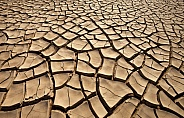 Environmental Disaster - Drought