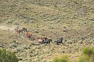 Mustang Roundup