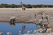 Busy waterhole - Etosha National Park - Namibia