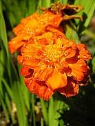 Dew Drop Floral