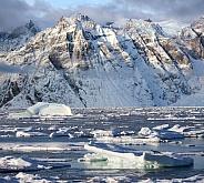 Hooded seal on sea ice - Greenland