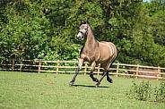 Dun Horse Bolting