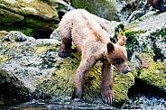Wild bear cub