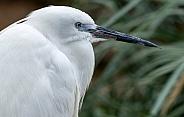 Egret Side Profile