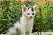 Spotted Kitten