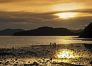 Low tide in Phangnga Bay - Thailand