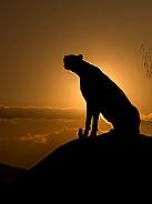 Cheetah Silhouette