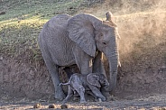 Elephant Mother and Newborn Calf