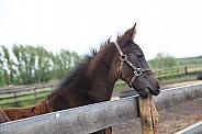 Thoroughbred Foal 1