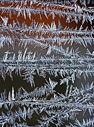 Frost crystals on a window