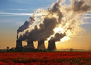 Poppy field and Power Station