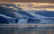 Whale - Montague Strait - Alaska - USA