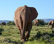 Say Hello. African Elephant