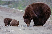 Two black bear cubs and mom
