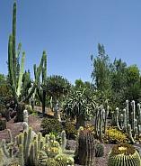 Cactus Garden - Fuerteventura - Spain