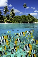 Fish on a reef - tropical lagoon - South Pacific