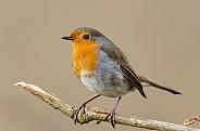 A Robin