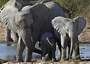 Mother and two baby elephants - Namibia