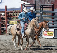 Horses in western tack