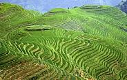 Longsheng Rice Terraces - China