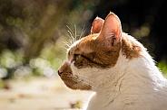 Domestic cat close-up
