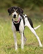 Trailhound