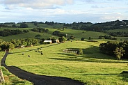 Byron Bay Farm