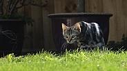 Jasper the kitten