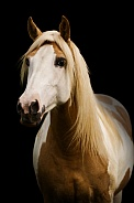 Palomino Paint Pony