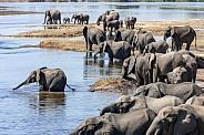 Group of African elephants (Loxodonta africana)