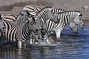 Zebra - Etosha National Park - Namibia