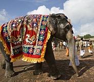 Temple Elephant - Thanjavur - India