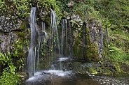 Fresh water flowing from a spring