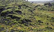 Moss covered Lava - Iceland